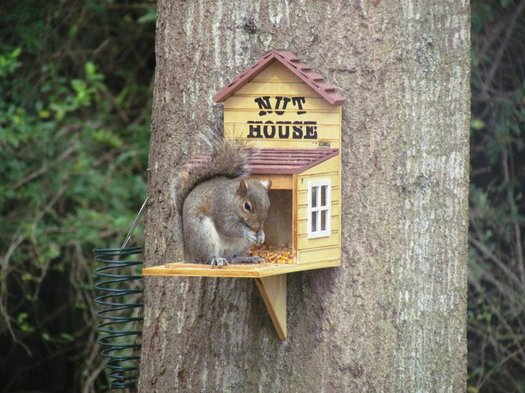 Squirrel appreciation day no left turns for Pecan house